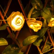 Svítící růže