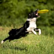 Silikonové frisbee pro psy